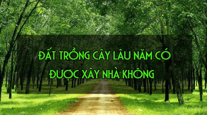 1631786577 dat trong cay lau nam co duoc xay nha khong 8