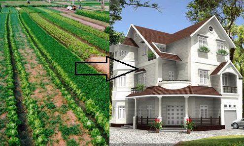 đất trồng cây lâu năm có được xây nhà không xử phạt thế nào